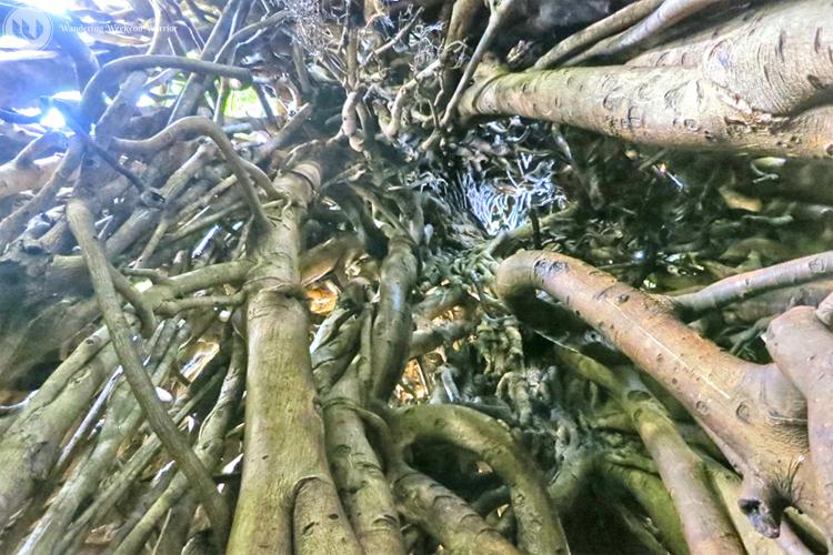 #3. Four-century Old Balete Tree
