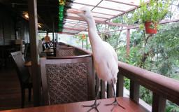 Hornbill Restaurant & Cafe
