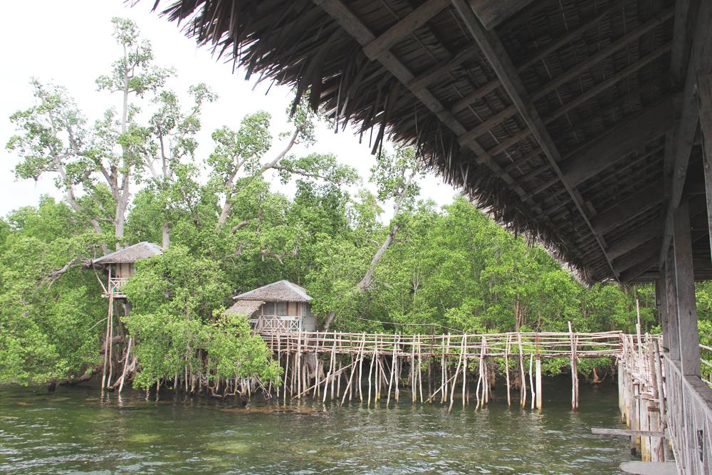 #4. Walk between tall mangroves