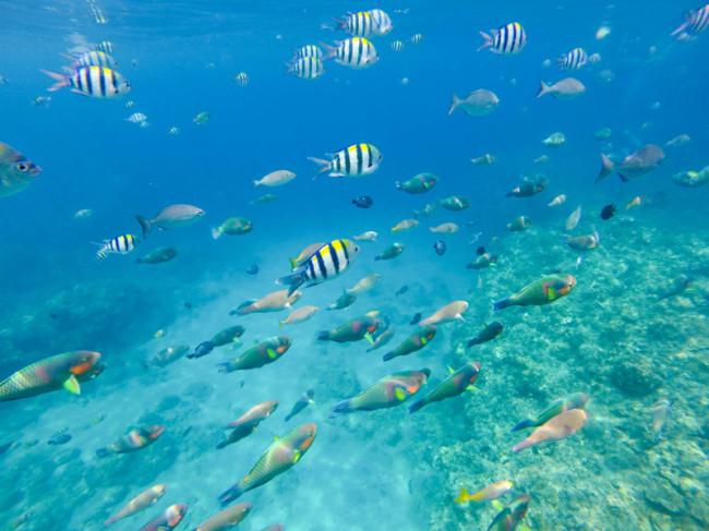 Summer Cruise: Of Chillin' Snorkelin', Corals and Scuba